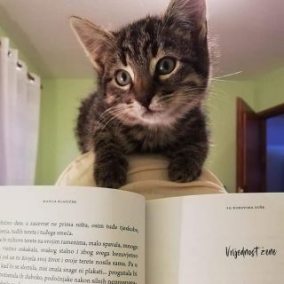 Jedno malo mace zaljubilo se u moju knjigu 😍❤ Hvala draga Andreja na divnim riječima i fotkama ❤📚 @nakladafragment #porubovimaduše #nakladafragment #bookstagram #book #knjiga #citajknjigu #marijaklasicek #books #bookauthor #bookcommunity #kitty #kitten #mace #littlekitty